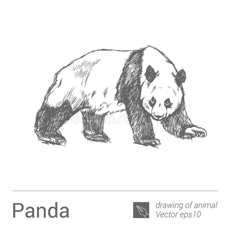 Panda, rysować zwierzęta, vectore ilustracji