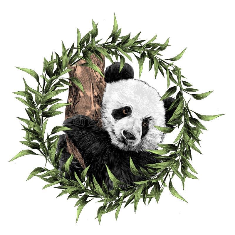 Panda sketch vector graphics stock illustration