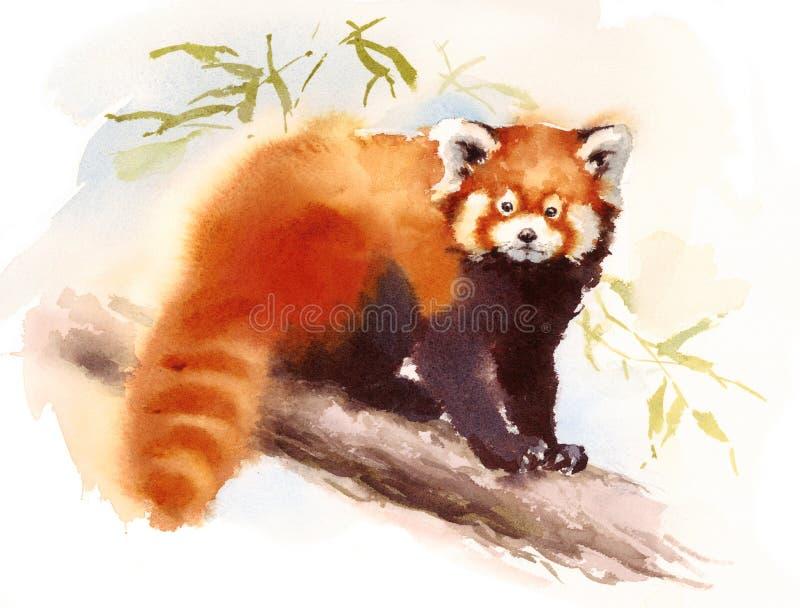 Panda Watercolor Animal Illustration Hand vermelho pintou ilustração stock