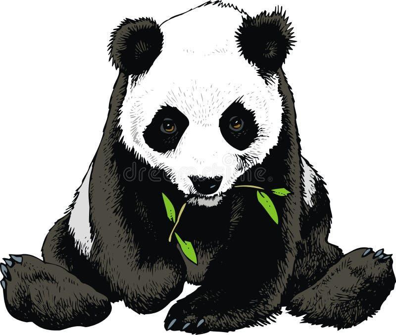 Pandabjörnen äter bambu royaltyfri illustrationer