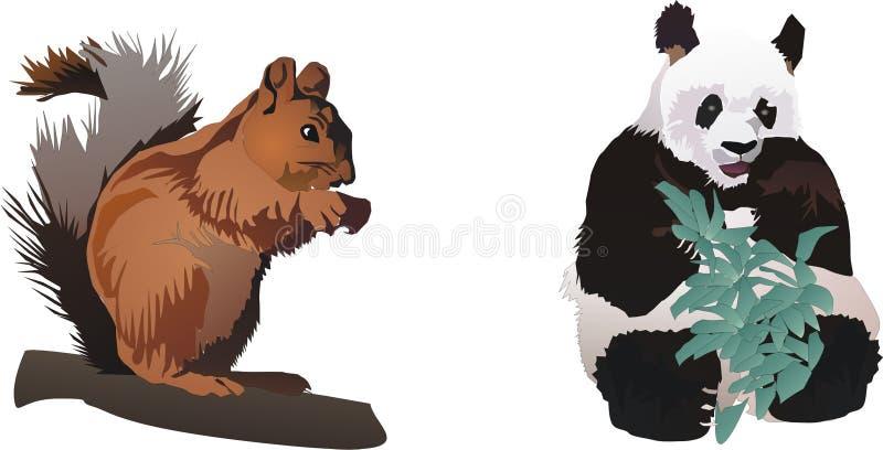 pandaekorre vektor illustrationer