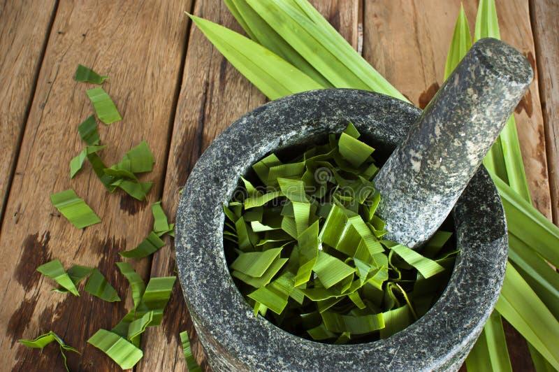 Download Pandan在灰浆离开准备小丘健康饮用的wat 库存照片. 图片 包括有 蔬菜, 成份, 休闲, 健康, 绿色 - 59112824