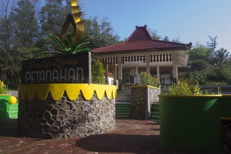 Pandan Kuning Petanahan stockfoto
