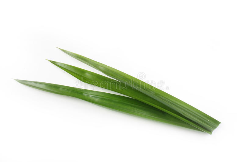 Pandan leaves. For cooking or food coloring stock images