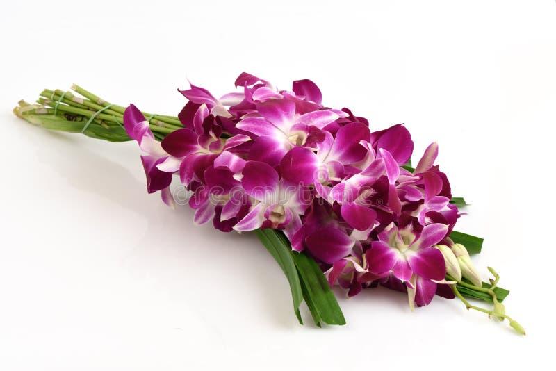 Pandanus-Palme und rosa Orchideen stockfoto