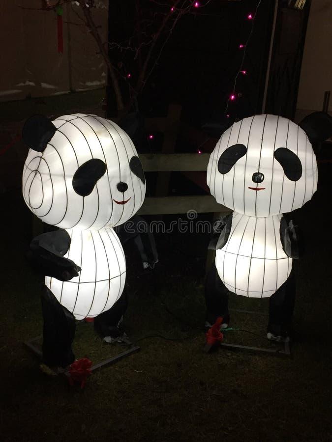 Pandas φαναριών μεταξιού στοκ φωτογραφία με δικαίωμα ελεύθερης χρήσης