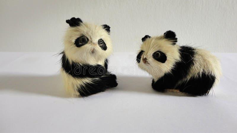 Pandas miniatura juguetonas ornamentales lindas imágenes de archivo libres de regalías