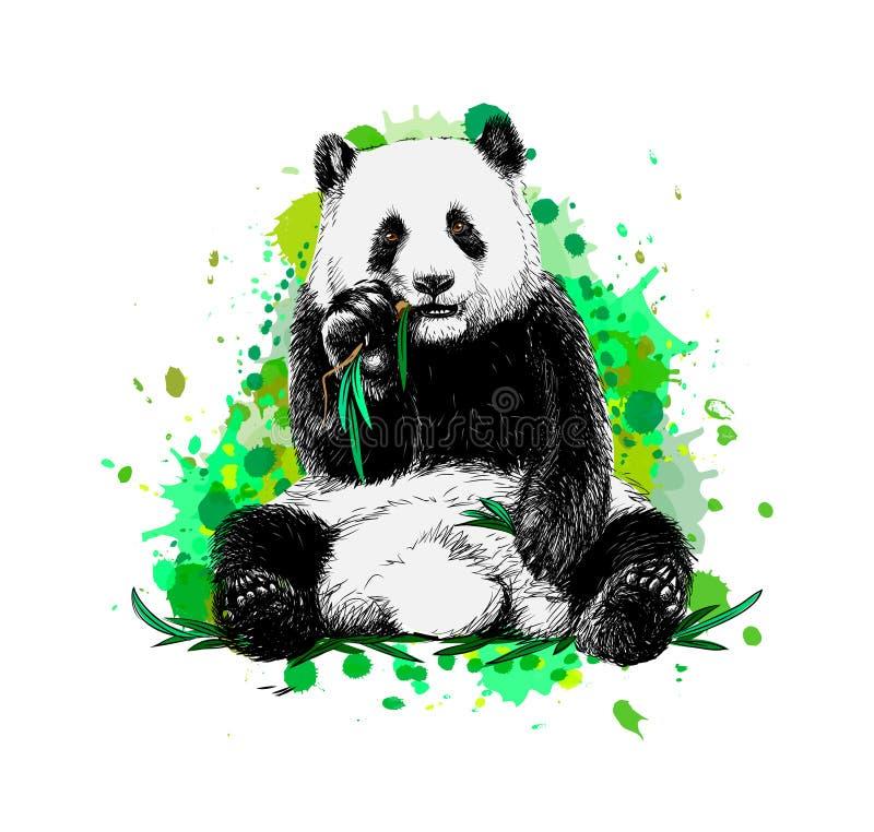 Pandazitting en het eten van bamboe van een plons van waterverf vector illustratie
