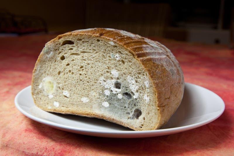 Pane della muffa immagini stock libere da diritti