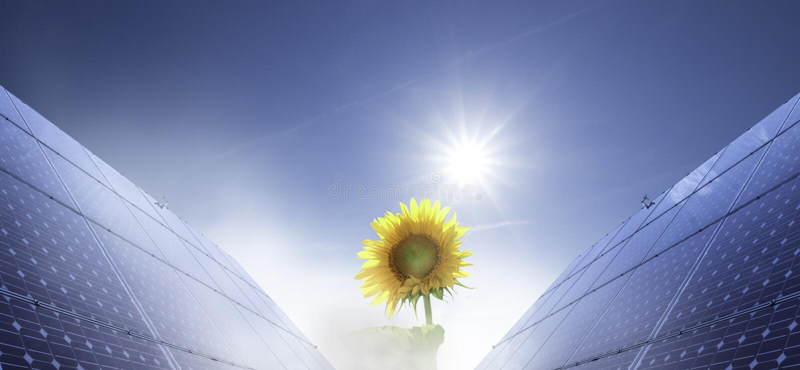 Panel słoneczny i krokus zdjęcia royalty free