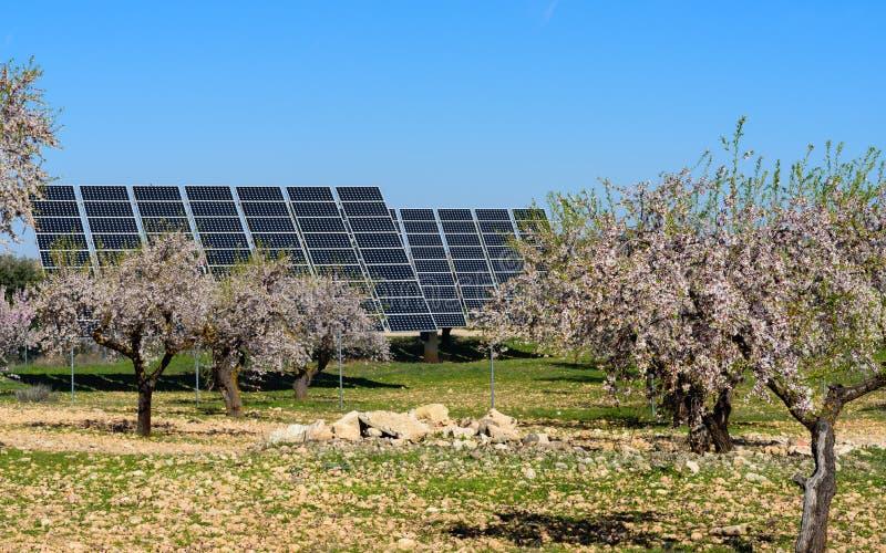 Panel słoneczny w migdału polu II zdjęcia stock