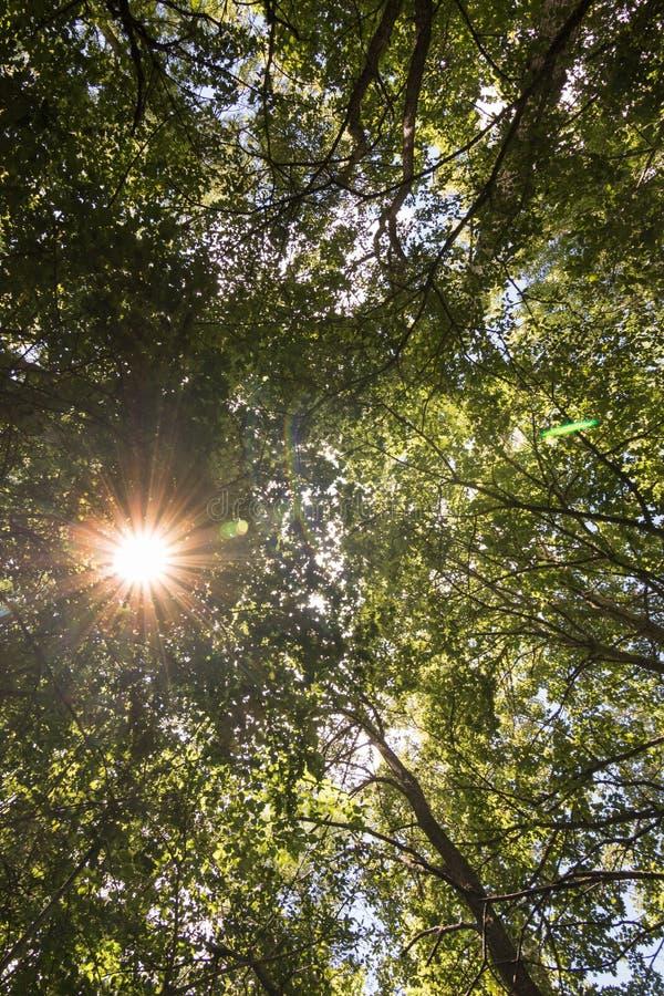Panelljus av solen som filtrerar till och med filialerna av en lövrik skog längs bankerna av floden Ebro i Burgos Spanien fotografering för bildbyråer
