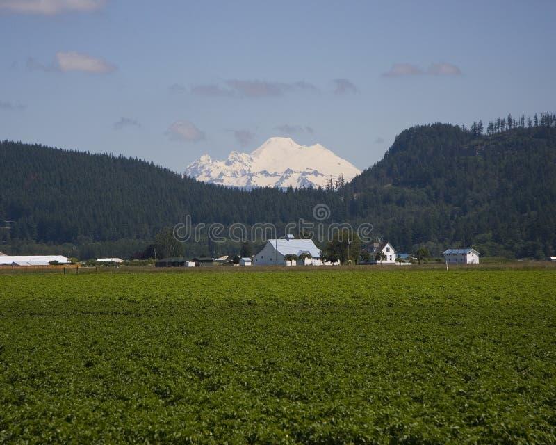 Panettiere e terreni coltivabili del supporto fotografie stock