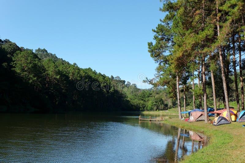 Pang Tong Under Royal Forest Park arkivbilder