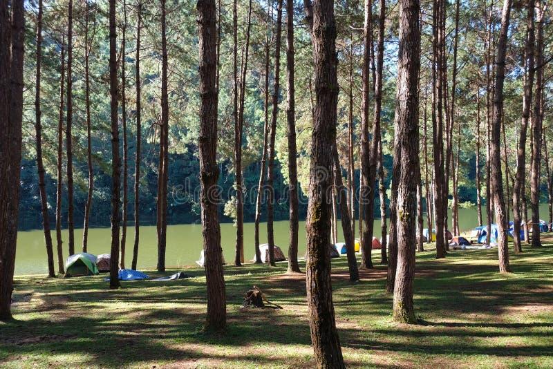 Pang Tong Under Royal Forest Park royaltyfri foto