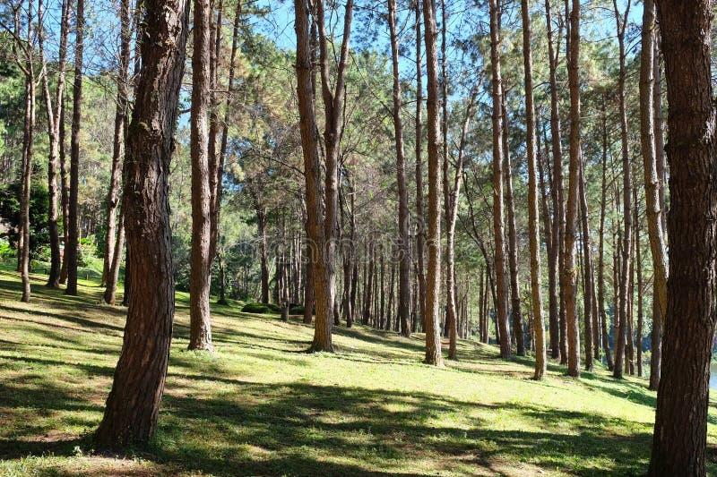 Pang Tong Under Royal Forest Park arkivfoton