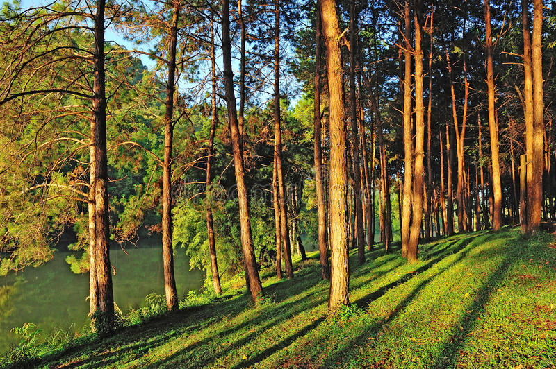 Pang Ung Forestry Plantations immagine stock