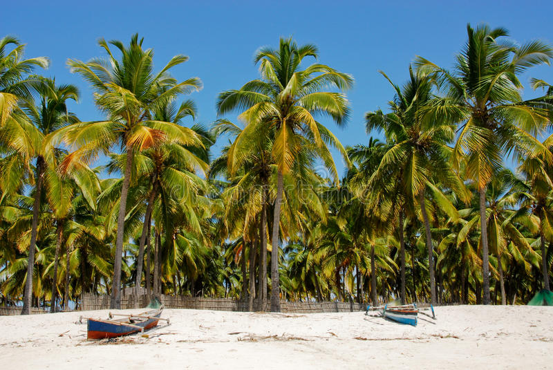Pangane Beach, Mozambique Royalty Free Stock Images