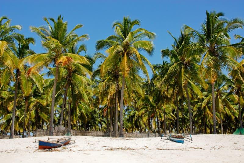 Download Pangane plaża, Mozambik obraz stock. Obraz złożonej z krajobraz - 29171999