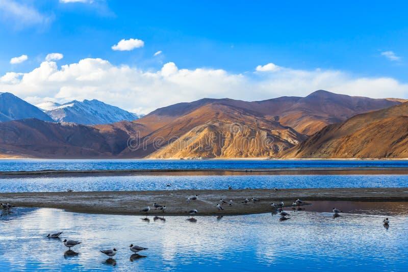 Pangong sjö i morgonen arkivbild