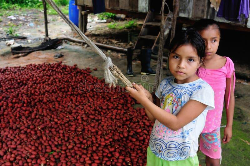 Panguana - Peru imagem de stock