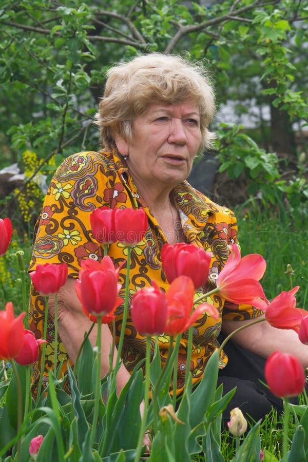 pani seniora tulipanów zdjęcie stock