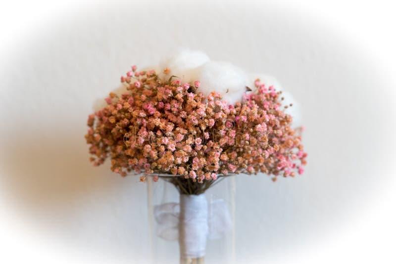 Paniculata e ramalhete do algodão fotos de stock royalty free