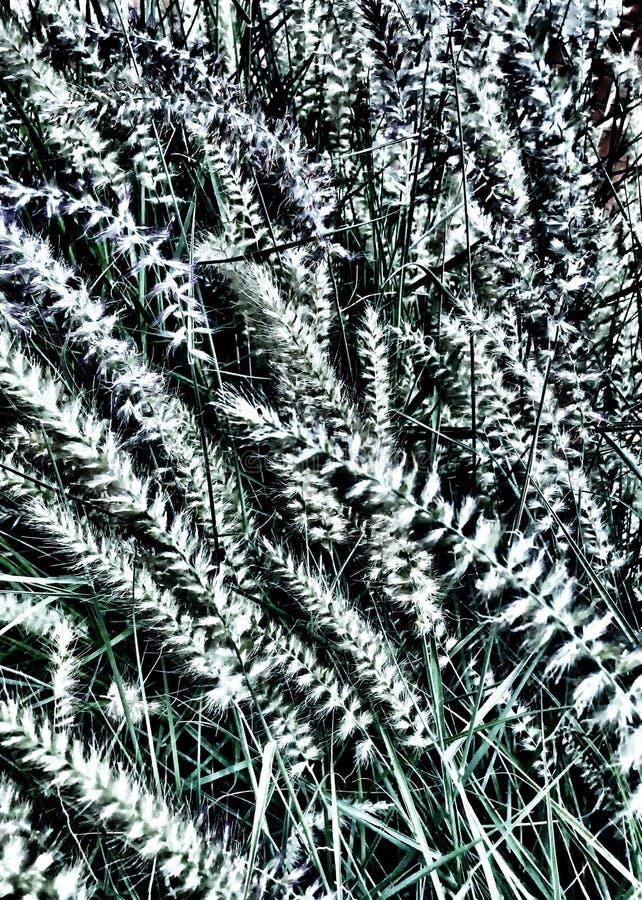 Wispy Grass Clip Art