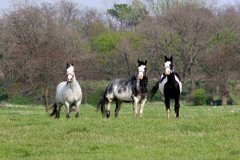 Download Panie malować zdjęcie stock. Obraz złożonej z koń, kantary - 127338