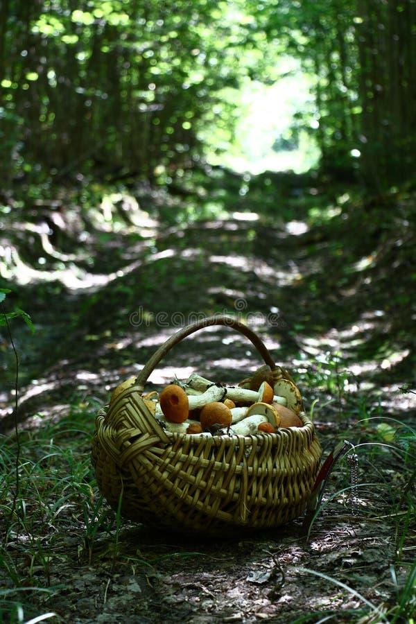 Panier avec des champignons de tremble sur la route en bois photographie stock libre de droits