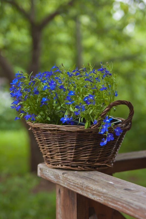Panier avec des fleurs photos libres de droits
