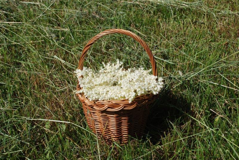 Panier avec des fleurs plus anciennes photos stock