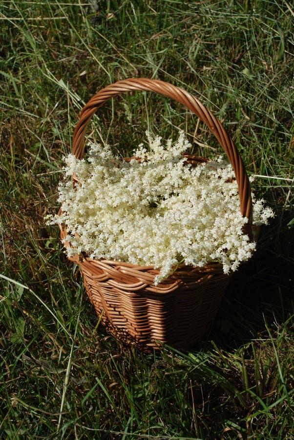 Panier avec des fleurs plus anciennes photographie stock
