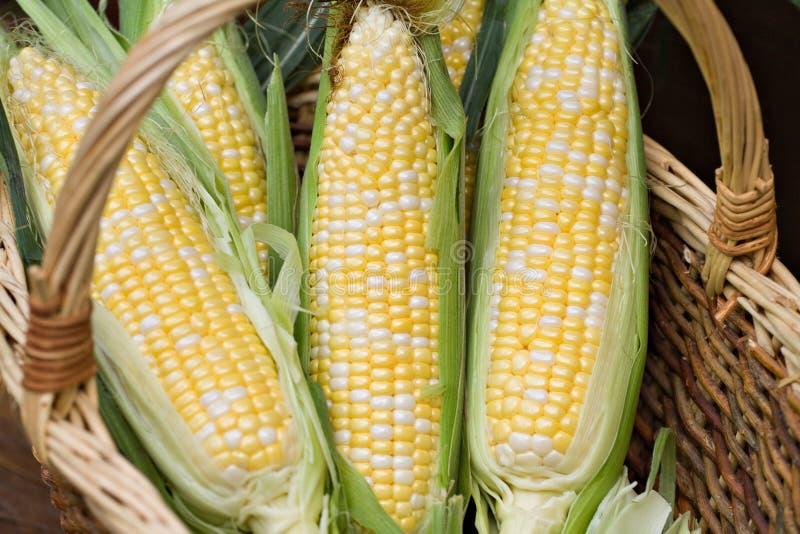Panier avec du maïs image stock