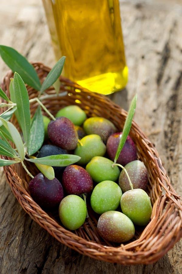 Panier avec la branche d'olivier images libres de droits