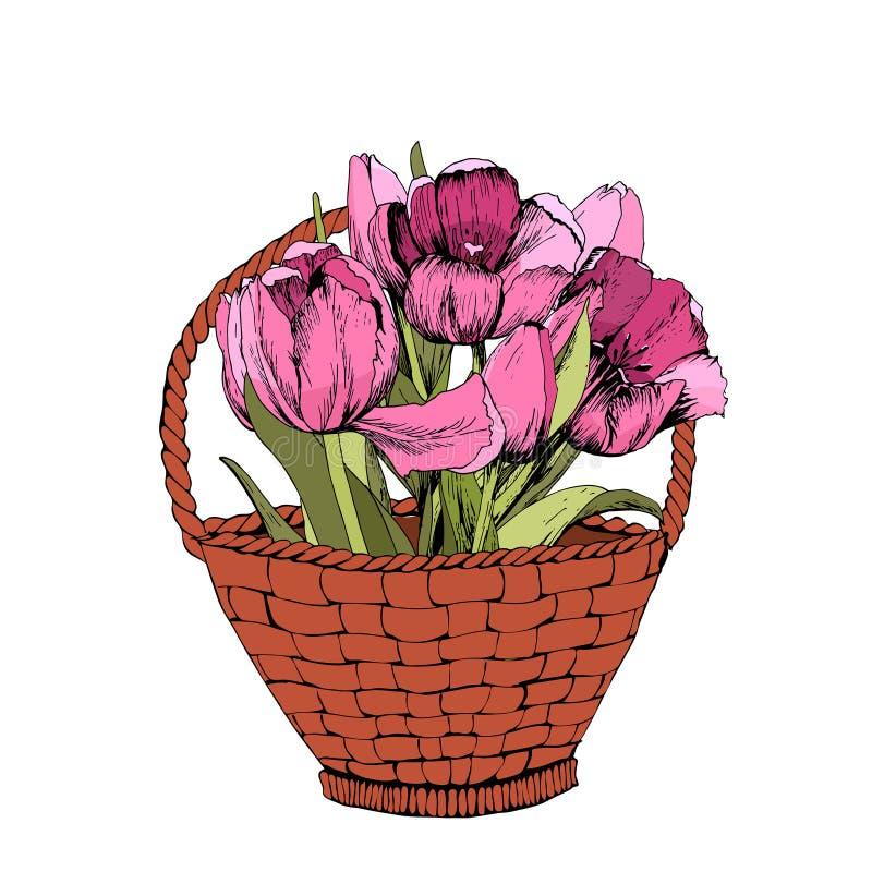 Panier avec les tulipes roses color?es Illustration Humeur de source illustration stock
