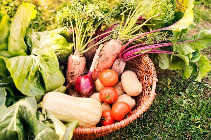 Panier complètement des légumes dans le jardin d'arrière-cour photos libres de droits