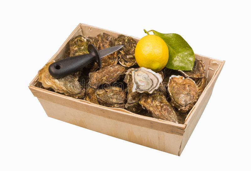 Panier cru d'huîtres avec le citron sur le fond blanc image stock