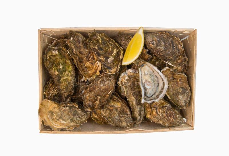 Panier cru d'huîtres avec le citron sur le fond blanc photographie stock libre de droits