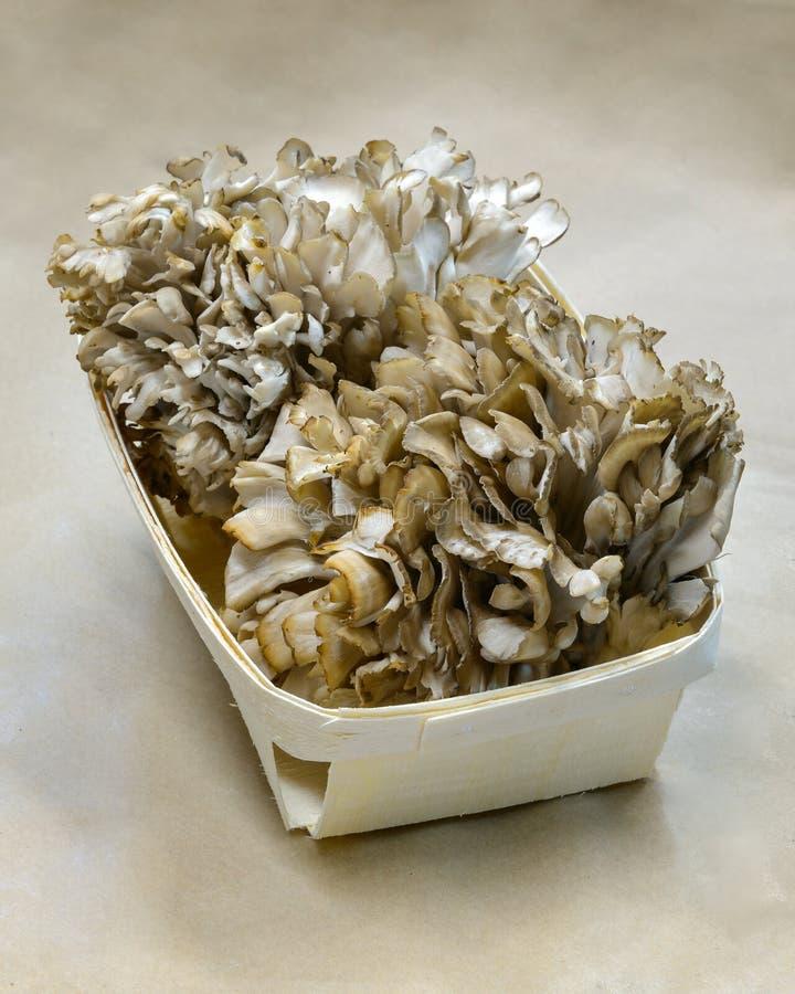 Panier de champignon de Maitake image libre de droits
