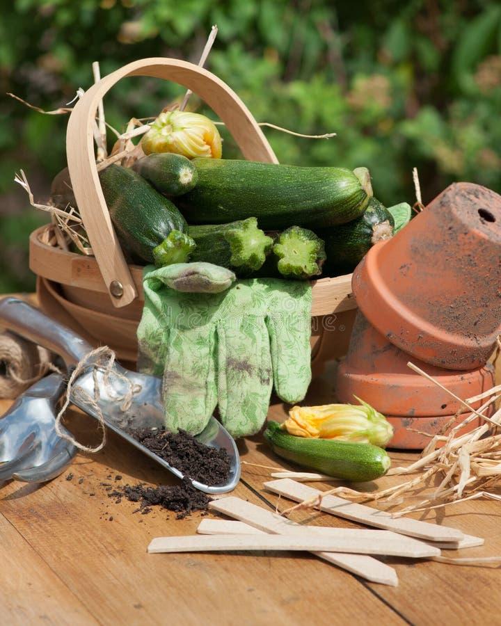 Panier de courgette avec des outils de jardin photos stock
