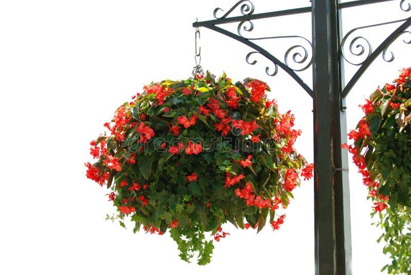 Panier de fleur photographie stock libre de droits
