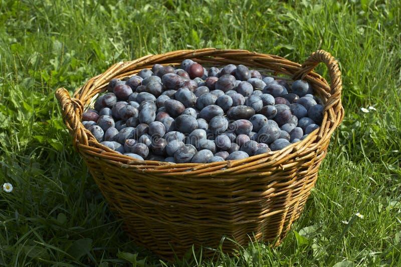 Panier de fruit image libre de droits