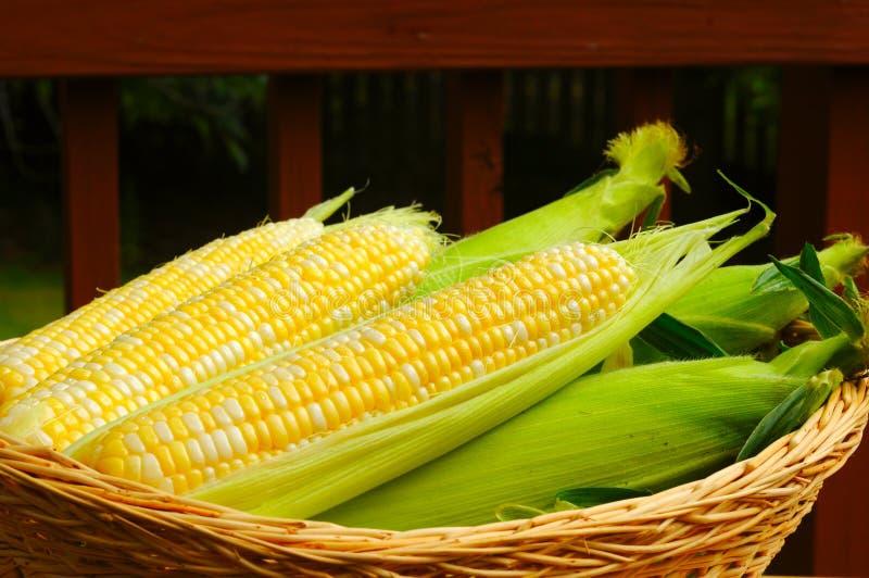 Panier de maïs image libre de droits