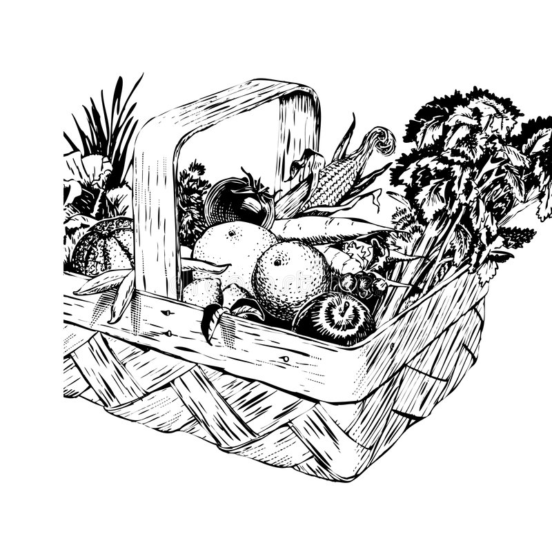 Panier de moisson des années 50 de cru illustration libre de droits