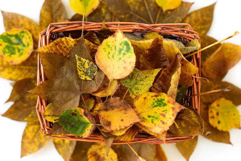 Panier de paille avec d'automne de feuilles toujours la vie jaune et brune photographie stock libre de droits