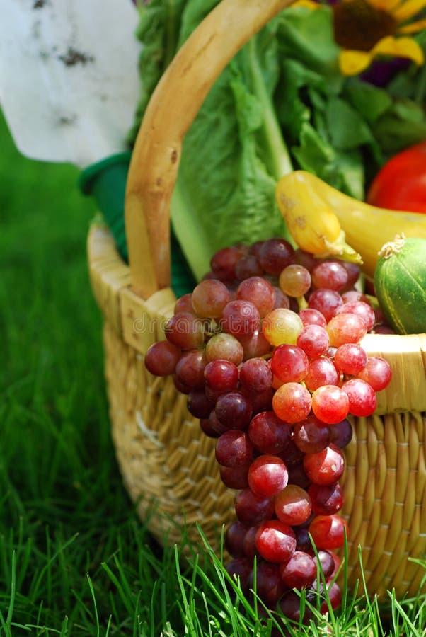 Panier des légumes de jardin photographie stock libre de droits