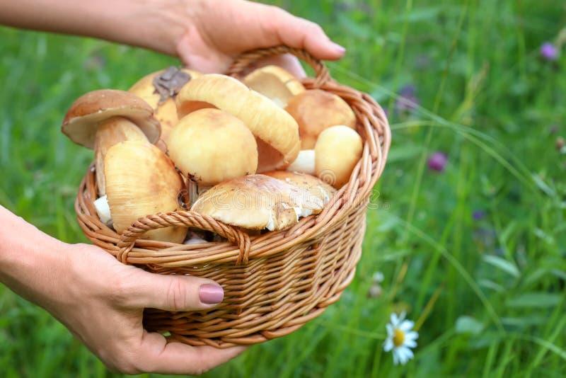 Panier en osier complètement des champignons de couche images libres de droits