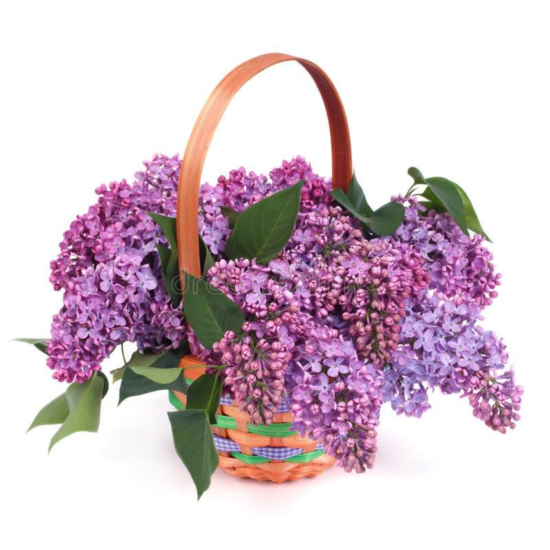 panier en osier rayé avec un bouquet des lilas pourpres photographie stock