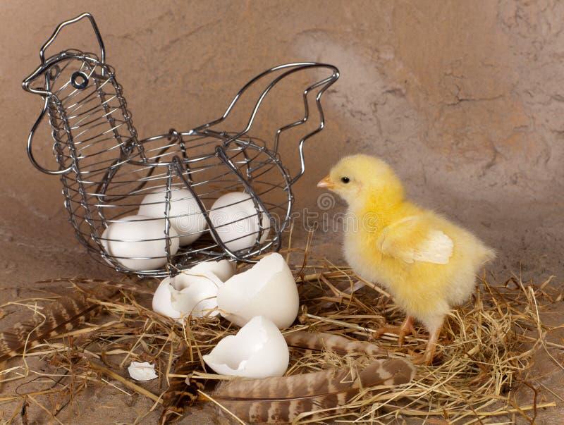 Panier et poussin de Pâques en métal photographie stock